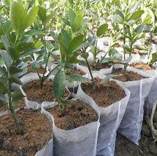 100pcs Plant Fiber Nursery Pots Raising Bag Plants Holder Garden Supply