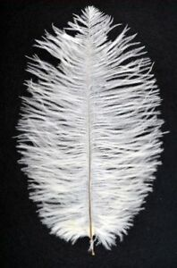 5 IVORY - Ostrich Feathers - 25cm to 30cm Long