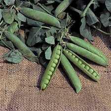 2017 Laxton Progress No. 9 Shell Seed Pea 1/2 b  approximately 950 seeds