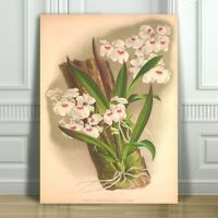 """JEAN LINDEN - Beautiful Pink & White Orchid #46 - CANVAS PRINT POSTER - 36x24"""""""