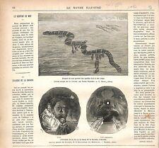 Serpent de Mer Anatifes/Colosse Tête de Statue de la Bavaria Munich GRAVURE 1877