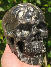 154mm Natural Orthoceras Nautiloid Cephalopod Fossil Crystal Carving Art Skull