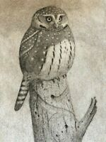 Sheridan Oman Pygmy Owl Etching Pencil Signed Artist Proof Limited Edition