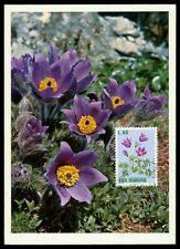 SAN MARINO MK 1972 FLORA BLUMEN KUHSCHELLE FLOWERS CARTE MAXIMUM CARD MC CM am61