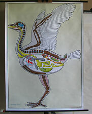 Schulwandbild Wandbild Dr.Lips Tierreich Baupläne Vögel birds Vogel 98x137 Bild