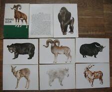 Lot 9 Post Card Animal Pc Beast Bear Goat Ram Horn Art Mammals Mountain Bull Set