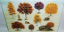 Glass Cutting Board  ASSORTMENT OF FALL TREES   11 3/4' x 7 3/4""