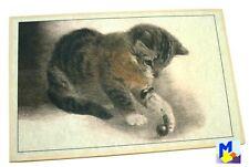 """Akzente Gallery Matte """"spielende Katze"""" Vlies bedruckt 44x67 cm waschbar NEU"""