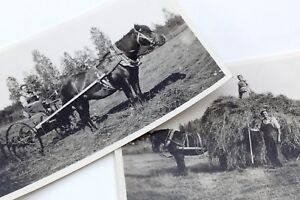 Horse Hay Harvesting Farmers Cart Cultivating Lifestyle Photographs Vintage H057