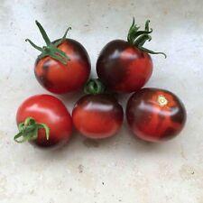 25 Graines de Tomate Cerise Osu Blue Méthode BIO seeds plantes légumes potager