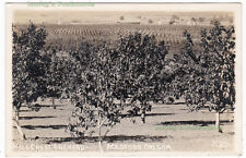 HILL CREST ORCHARD Medford OREGON - c1920 Photo POSTCARD Jackson County