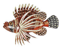 Handpainted Striped Tropical Fish Wall Beach Bath Decor Kids 6 inch TFW58