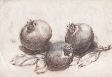 MELOGRANI Pomegranate - Disegno Originale a Carboncino 1900 charcoal drawing