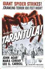 Tarantula Poster 09 A2 Box Canvas Print