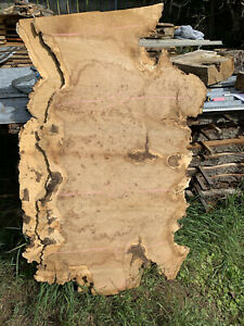 Pippy Oak Timber/burr Oak/river Table/Character/live Edge/hard Wood/not Yew