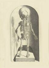 Skeleton Child Left, De Humani Corporis, 1685, Govert Bidloo, Anatomy Poster