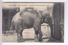 CPA  PARIS 75 -  ELEPHANT DEMANDANT LA PORTE ZOO JARDIN DES PLANTES 1905 ~C11