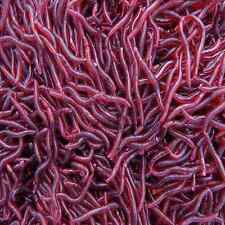 Hot Sale 50Pcs Worm EarthWorm Fishing Soft Lure Tackle Baits Bass Trout Bream