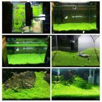 1000 stücke Aquarium Grassamen Wasser Wasser Home Aquarium Pflanze Decor R0 T6N8