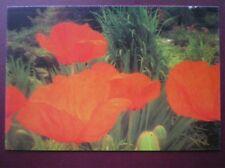 POSTCARD ORANGE POPPIES FLOWER