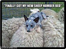 Dog Humor Australian Cattle Dog New Sheep Number Bed Refrigerator Magnet