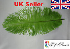 "8""-14"" 20-35 cms COLOURED OSTRICH FEATHERS  Packs of 1-100 ALL COLOURS"