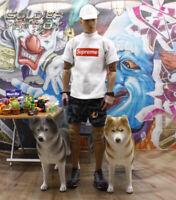"Free Shipping 1/6 Scale Siberian husky  HASKI Dog Animal for 12"" Action Figure"