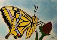 ACEO Swallowtail Butterfly Animal Original Artwork Art Card Signed Artist