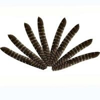 30X Full Length 20cm Wild Primary Turkey Right Wing Arrow Feathers Fletching