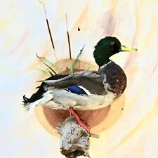 Farmraised Taxidermy Mallard Drake Bird Waterfowl Wall Mount Hunt Decor