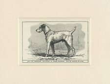 JACK RUSSELL WIRE FOX TERRIER ANTIQUE 1900 ENGRAVING NAMED DOG PRINT MOUNTED