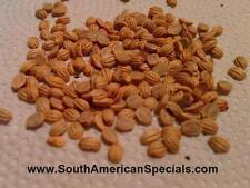 25+ TRUE Psychotria viridis seeds Fresh and Viable - Ayahuasca Chacruna  Caapi