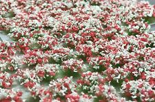Miniature Self Adhesive Static Flowering Shrub Tufts - 6mm Red & White Army Pack