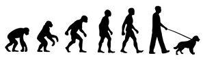 Springer Spaniel Walker 'Evolution' car sticker, vinyl decal