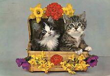 Alte Postkarte - Zwei kleine Katzen im Bastkoffer