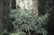 Huile essentielle de Katrafay pure et naturelle 100 ml