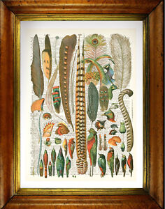 """Vintage Upcycled Dictionary Print: """"Antique Bird & Peacock Feathers"""""""