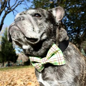 Red and Green Plaid Bow Tie for Dogs (UOH) - FREE SHIPPING
