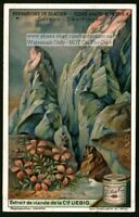 Alpine Mountain Flower Blooming Saxifragia 1920s Trade Ad Card