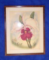 Rare Vintage Original Hawaiian 1940s Ted Mundorff Cattleya Orchid Art Print