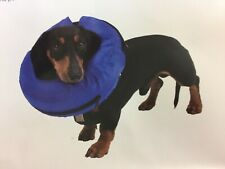 Buster Inflatable Dog Collar - Kruuse - Injuries, rashes and post-surgery collar