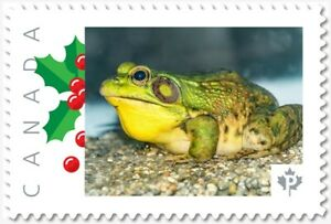 GREEN FROG = Picture Postage Personalized  stamp MNH Canada 2018 [p18-06sn14]