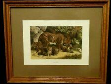Mother Leopard Baby Cubs Chromolithograph Hess 1885 Home Decor Antique Art Print