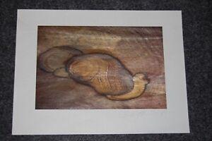 Ägypten -Sinai, Duck- Photografik Bodo Steguweit, 40x30cm, Motiv: 3, I/II