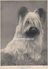 Gorgeous Young Skye Terrier Dog 1934 Dogs Art Photo Print