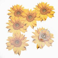 12-er Set Glasuntersetzer Bierdeckel Tassenuntersetzer Motiv Sonnenblume Gelb