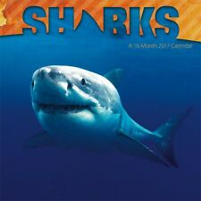 SHARKS - 2017 WALL CALENDAR - BRAND NEW - OCEAN 873061