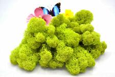 Trockenblumen/-pflanzen