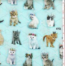 Kitty Glitter Digital Print Kittens Cat cotton quilt fabric BTY Studio E