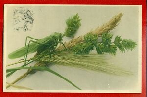 GREEN GRASSHOPPER VINTAGE POSTCARD USED 3169